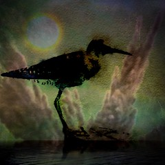Sandpiper.2. Other Worlds (lindyginn) Tags: birds photo ipad finger painting art ethereal surreal watercolor dream dark moonlight sun water reflections ginn mobile photography clouds light sky
