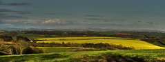 Fields of Spring (suerowlands2013) Tags: springcrops springfields fields farming yellow secornwall panorama pano rapeseed eveninglight
