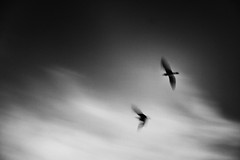Fly (Andrea Scire') Tags: sky white black bird window mood emotion andrea finestra cielo e target feeling bianco nero insegna emozione scir andreascire andreascir phandreascire