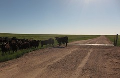 morning on open range (Eli Nixon) Tags: road usa colorado grover paths prairie drivebyshooting pawneenationalgrassland iso80 weldcounty shortgrassprairie