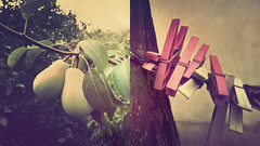 Country Life Diptych (Visualtricks) Tags: wood pink 2 two texture diptych couple pears country albero pere textured clothespins legno mollette flypaper