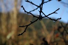 IMG_8355 (Alisoninoska) Tags: winter paisajes naturaleza nature landscape lluvia invierno macrofotografa