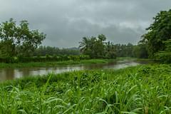 ... (Kris Kumar) Tags: india green water rain canal august kerala monsoon kochi 2013 infopark kakkanad canon7d canonef2470mmf28llens