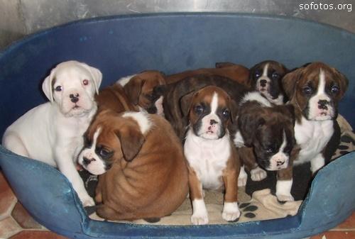 Filhotes de cachorros 75