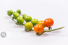 Stages | Cherry Tomatoes (Cristian Sabau) Tags: red stilllife food macro green photography juicy raw vine nopeople stages whitebackground studioshot freshness unripe ripe selectivefocus inarow cherrytomato colorimage studiolights multipleobjects 2013 focusonforeground wwwcristiansro
