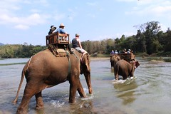 Traditional River Crossing (melanie2wright) Tags: people elephant nature beautiful animal river asian big amazing crossing village ride traditional melanie lodge riding experience huge local wright laos nurture eco thrill asianelephant mahout localpeople melaniewright reallifeexperience mahoutecolodge