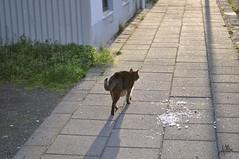 (Julia Mora Crespo) Tags: street city light shadow cat iceland islandia nikon kitty reykjavik backlighting nikond5000