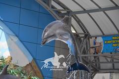 Kateryna and Ganna (Megakillerwhales) Tags: nemo dolphin ukraine killer dolphins orca beluga belugawhale belugas dolphinarium killerwhale orcas killerwhales kharkiv orcawhales cetaceans cetacean dolphinshow belugawhales orcawhale oneocean orcashow nikond3100 nalanidreamer megakillerwhale