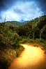 Trail at Julia Pfeifer State Park (AliTalley) Tags: california blue clouds forest catchycolors gold bigsur trail juliapfeifer juliapfeiferstatepark tpslandscape tpstrail