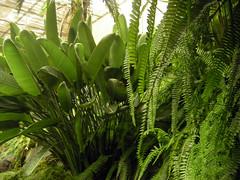 Estufa Fria. Lisbon. Portugal (ajhammu0) Tags: portugal lisboa lisbon ferns botanicalgardens estufafria