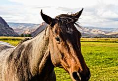 Got Apples? (Karen McQuilkin) Tags: horse mountains west hopeful gotapples karenmcquilkin