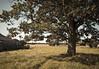 Petit coin de paradis (alpha du centaure) Tags: macro nature architecture de coin photos picture images campagne arbre paradis dmc photographe chêne visuels photosofart lumixpanasonic naturalphotos dmcfz18 alphaducentaure photosartistique stephanemarechal photosdenature photosdart photosartistic fz38panasonicphotographernormandiefermebocagepetit