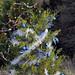 Trees_of_Loop_360_2013_049