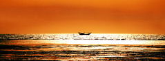 Persian Gulf, Sunset, Infinity.. (Vafa Nematzadeh Photography) Tags: you hank