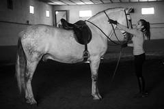 cuadra (david buedo) Tags: horses horse caballo caballos gemma indio cuadra