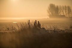 _DSC5685.jpg (Ingeborg Ruyken) Tags: morning autumn sky mist ice fog sunrise dawn haze nevel flickr frost december herfst freezing lucht polder ochtend facebook ijs boerderij vorst zonsopkomst kruisstraat natuurfotografie vriezen 2013 catsunriselandscape catfogandmist