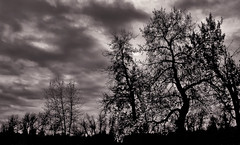 Ominous Treeline (LostMyHeadache: Absolutely Free *) Tags: autumn trees sky fall nature leaves weather clouds forest canon woods branches horizon silhouettes overcast davidsmith fishcreekpark calgaryalbertacanada atmosphre eos60d