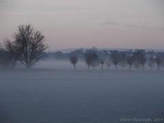 Nebel (Oliver Deisenroth) Tags: nature fog sunrise nebel natur foggy sonnenaufgang olympusstylus1