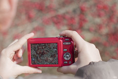 a year of sundays 14/52 (idni . idniama) Tags: camera winter red nature girl rojo hands nikon berries image gettyimages 2014 bayas 52weeks santjulia ayearofsundays idni gettyimagesiberiaq3 unaodedomingos