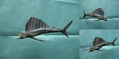 Nguyen Ngoc Vu - Sailfish (shuki.kato) Tags: fish paper origami group fold complex vu nguyen vog sailfish vietman ngoc