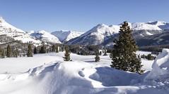 Snowy Landscape_MG_1053