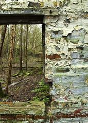 Through the window (Trevor King 66) Tags: wood building green window nikon peeling decay ruin railway glossop rundown railwayshed dinting dintingrailwaycentre d3100