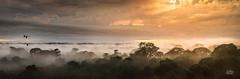 Macaws at daybreak (Mike Hankey.) Tags: southamerica amazon january2014