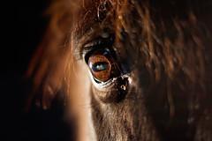 Eye, eye. (whistonmay) Tags: light horse eye up close