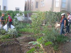 gardencity1_4959034512_l