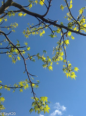 RayK20-9.jpg (RayK20) Tags: england unitedkingdom 2014 ipad stainesuponthames spring2014 119greenlane