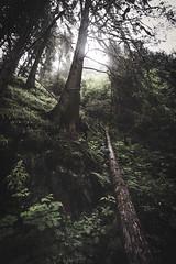 Glifenklamm (alexanderkoch) Tags: italien italy water rain creek wasser cloudy path bach valley gorge regen vipiteno weg schlucht wolkig furt sterzing klamm