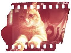 . (mashkagav) Tags: cat summer2012