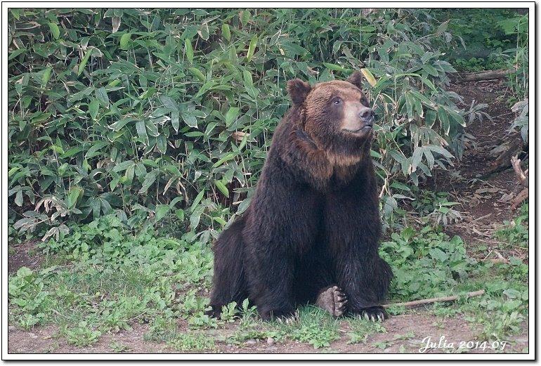 熊牧場 (11)