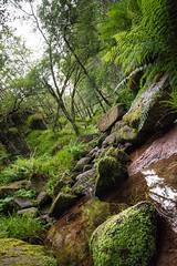 Burn O Vat (malcolm cross) Tags: trees plant tree water creek forest river landscape scotland waterfall nikon rocks stream outdoor burn serene vat burnovat d7100 nikond7100