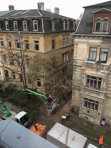 Baumschnitt Lisztstraße