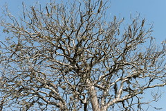 DSC07403_DxO_Bildgröße ändern (Jan Dunzweiler) Tags: madagaskar africanbikers reniale renialareserve jandunzweiler