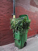 Green plastic of backalley cuttings bouquet of compost. (Tim Kiser) Tags: 2015 20150701 bayarea california chinatown chinatownneighborhood cityandcountyofsanfrancisco img5195 july july2015 rossalley sanfrancisco sanfranciscobayarea sanfranciscocalifornia sanfranciscochinatown brickwall bricks compostbin compostgarbagecan composttrashcan compostables compostablesbin compostablesgarbagecan cutflowerindustry cutflowerstems cutflowerwaste cutflowers downtown downtownsanfrancisco floriculture floriculturewaste floristwaste flowerstems flowerwaste garbagecan graffiti graffititags greenplastic leftoverstems northerncalifornia paintedbrickwall paintedbricks paved pavement pipe plantwaste plasticgarbagecan plastictrashcan rollinggarbagecan rollingplasticgarbagecan rollingplastictrashcan rollingtrashcan stems tags unitedstates