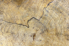 Faille (Fabien Husslein) Tags: detail bois wood faille rift texture nature art