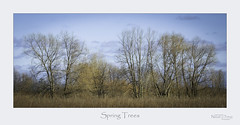Spring Trees (baldwinm16) Tags: forestpreserve il illinois march habitat marsh midwest nature naturepreserve prairie spring wetland