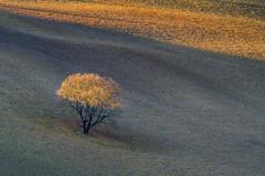 The Last Ray of Light - IN EXPLORE (emanuelezallocco) Tags: luce campi campagna panorama albero relax tramonto marche landscape nature natura