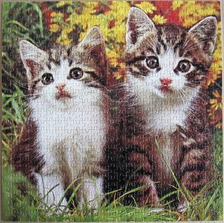 Kätzchen / Kittens