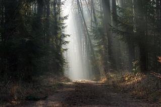 The Woods II