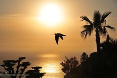ibis a contraluz (barragan1941) Tags: ibiza paisajes pruebas sunset