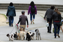 Man walking several dogs near Music Concourse in San Francisco's Golden Gate Park 170316-150646 C4e (Wambeke & Wambeke Photography, Art, & Textiles) Tags: dog dogs manwalking manwalkingdogs dogwalker severaldogs leashes dogsonleashes people groupofpeople stairs cement goldengatepark sanfrancisco charliewambekephotography charliesphotoart charliewambekephoto charliewambekephotograph canonsx50photo canonsx50photograph canonpowershotsx50photograph wambekewambekephotographyarttextiles wambekewambeke wambekeandwambekephoto wambekeandwambekephotography manwearingcap
