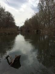 IMG_0601 (augiebenjamin) Tags: lakeviewparkway lakeshoredrive provo utah mountains provorivertrail trees spring winter spanishfork nebo bicentennialpark oremcity provocity utahvalley utahcounty oremarboretum