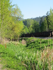 By the path (jamica1) Tags: railroad canada train bc arm pacific salmon railway rr columbia canadian british freight shuswap