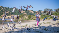 Chasing Pigeons In The Park (Eric Dugan) Tags: california park beach childhood geese fight nikon child pigeons joy running birdsinflight martinez d600 ericduganphotography