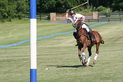 Polo in M'burg (Kellsboro) Tags: polo middleburgva