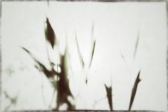 fluttua (miglio) Tags: lago leaf natura cielo foglia riservanaturale canoneos7d