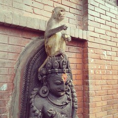 Monkey on the Crown (ayush_shakya) Tags: morning travel nepal animal photography asia wildlife kathmandu journalism swayambhu swayambhunath travelasia nepaliphotography nepaliphotographer travelnepal